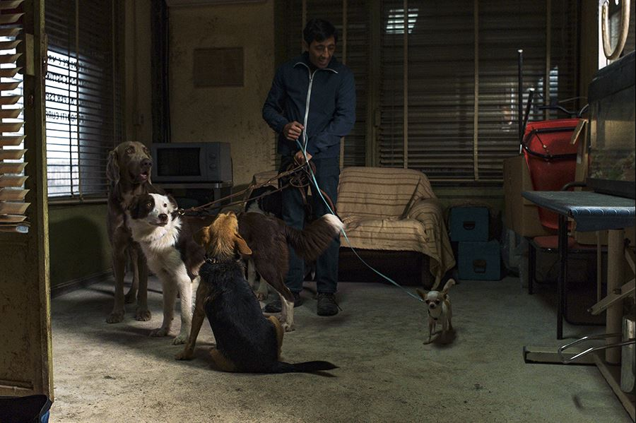 Fot. kadr z filmu Dogman