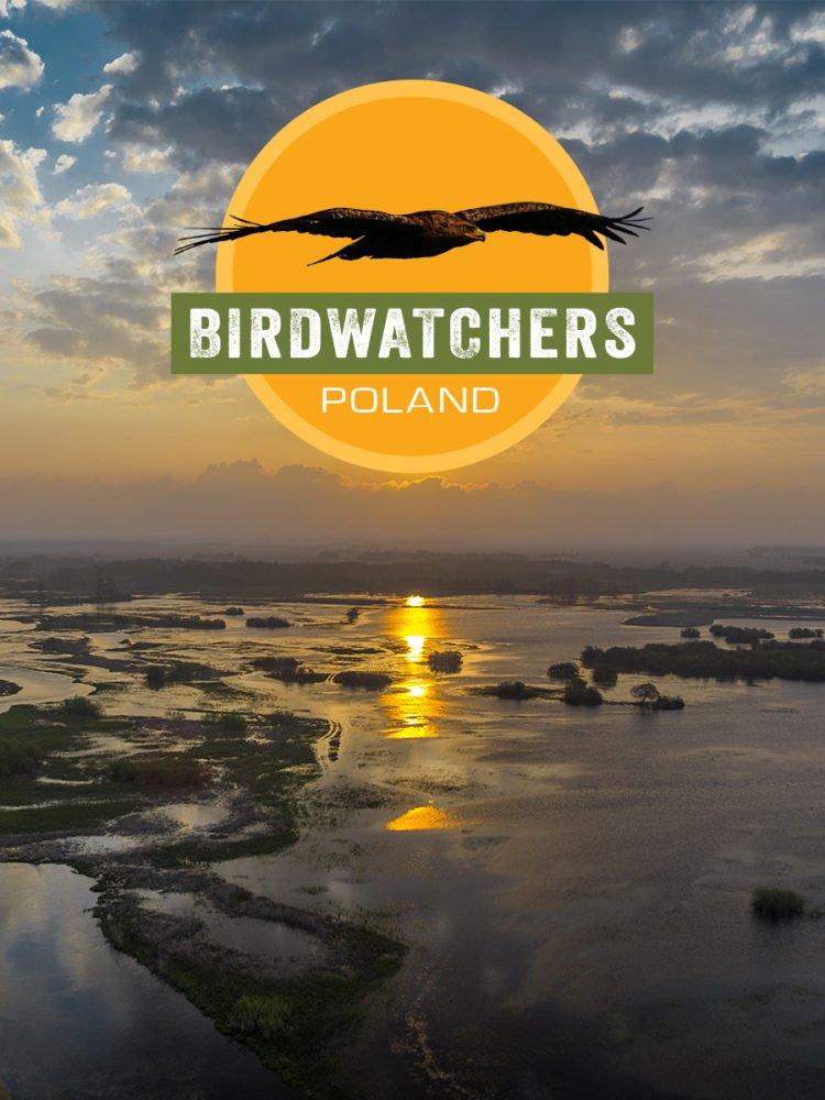 cda birdwatchers polska serial