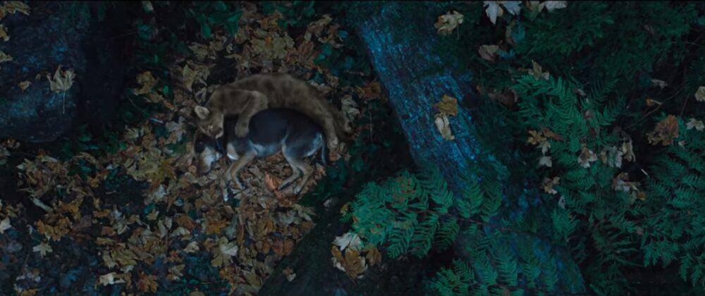 Zwierzęta w filmach